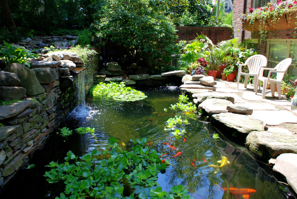 About koi pond singapore top koi pond specialist company for Koi pond specialist